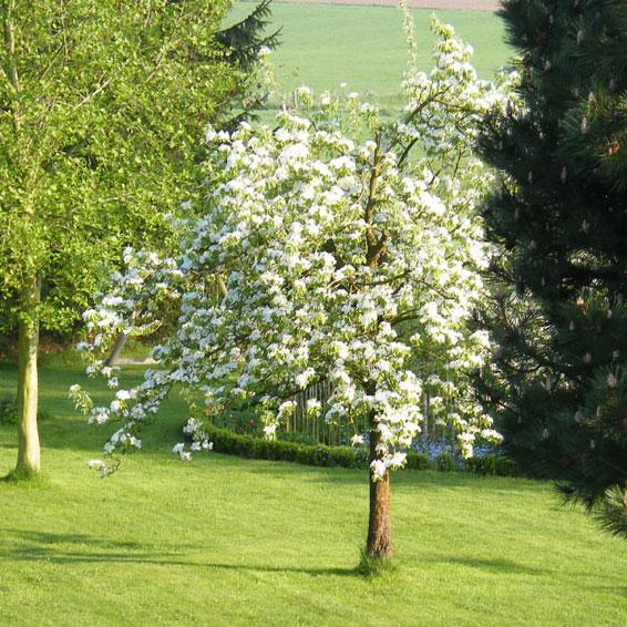 Landschapstuin met solitaire bomen en zichtlijnen
